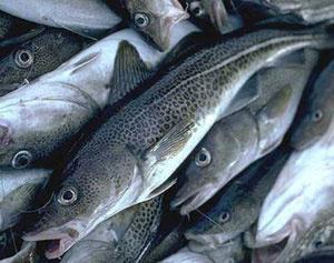 Треска и трескоподобни риби