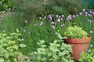 Растения и сън