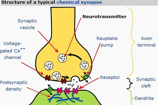 Невротрансмитери