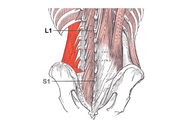 Квадратен поясен мускул