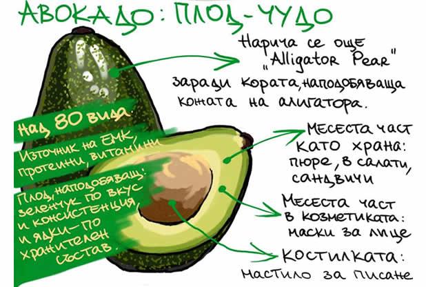 13 неща, които може би не знаете за авокадото