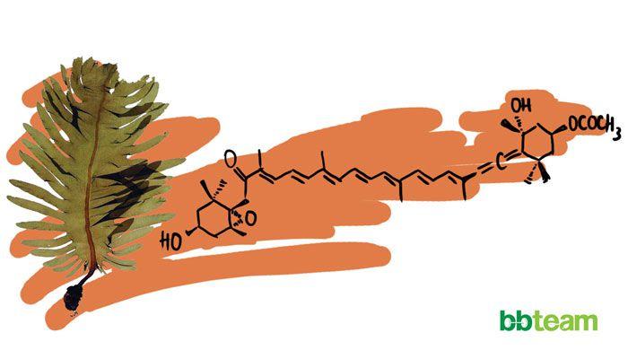 Фукоксантин (Fucoxanthin)