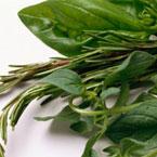 Риган (Оriganum vulgare)