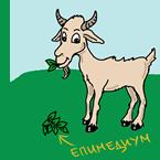 Епимедиум