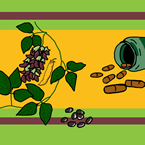 Кадифен боб (Mucuna pruriens)