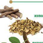 Сладък корен (женско биле)