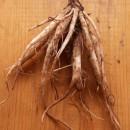 Репей корен