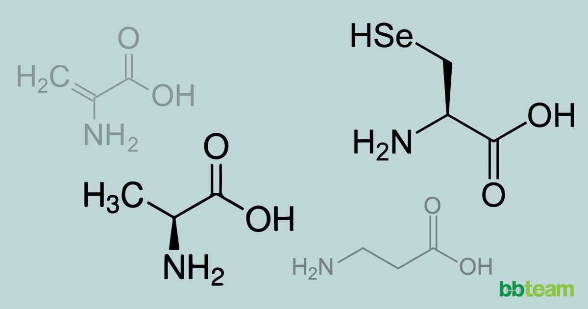 Неесенциални и непротеинови аминокиселини